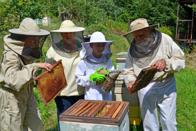 Rodzina w strojach pszczelarskich w pasiece. Kadzenie pszczół, wyciąganie plastrów z ula.