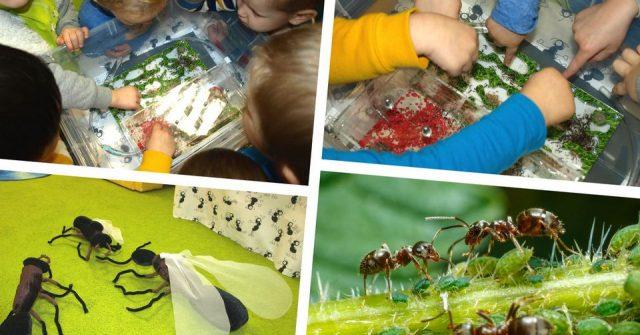 Tajemniczy świat owadów - pszczoły i mrówki