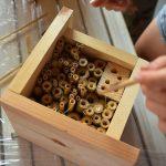 Wykonywanie z drewna i trzciny hotelu dla owadów dzikich pszczół murarek